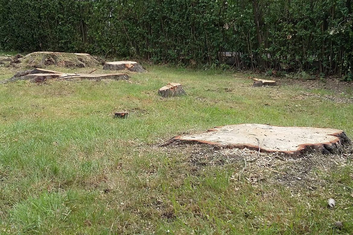 Middle Drive - several stumps to remove