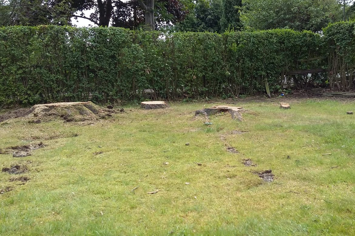 Middle Drive - Tree stumps to be removed