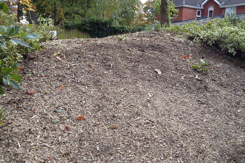 Richmond Mews, the stump is gone!