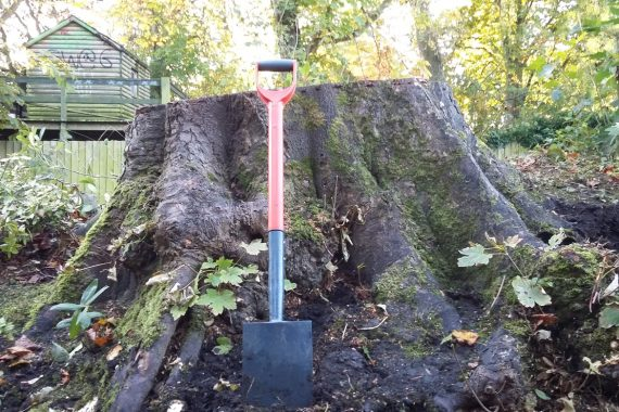 Richmond Mews - Huge Sycamore Stump