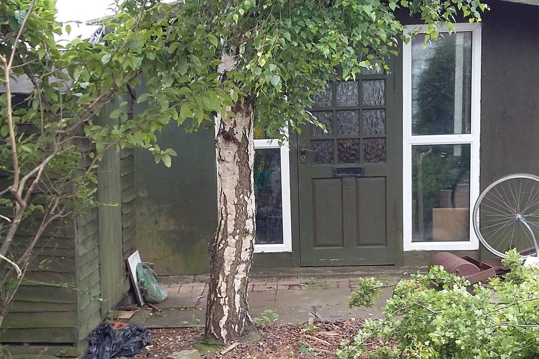 Seaview - Birch Tree before felling
