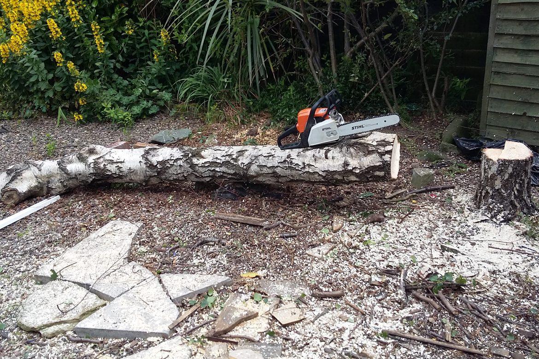 Seaview - tree has been felled