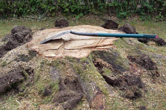 Middle Drive - Large tree stump