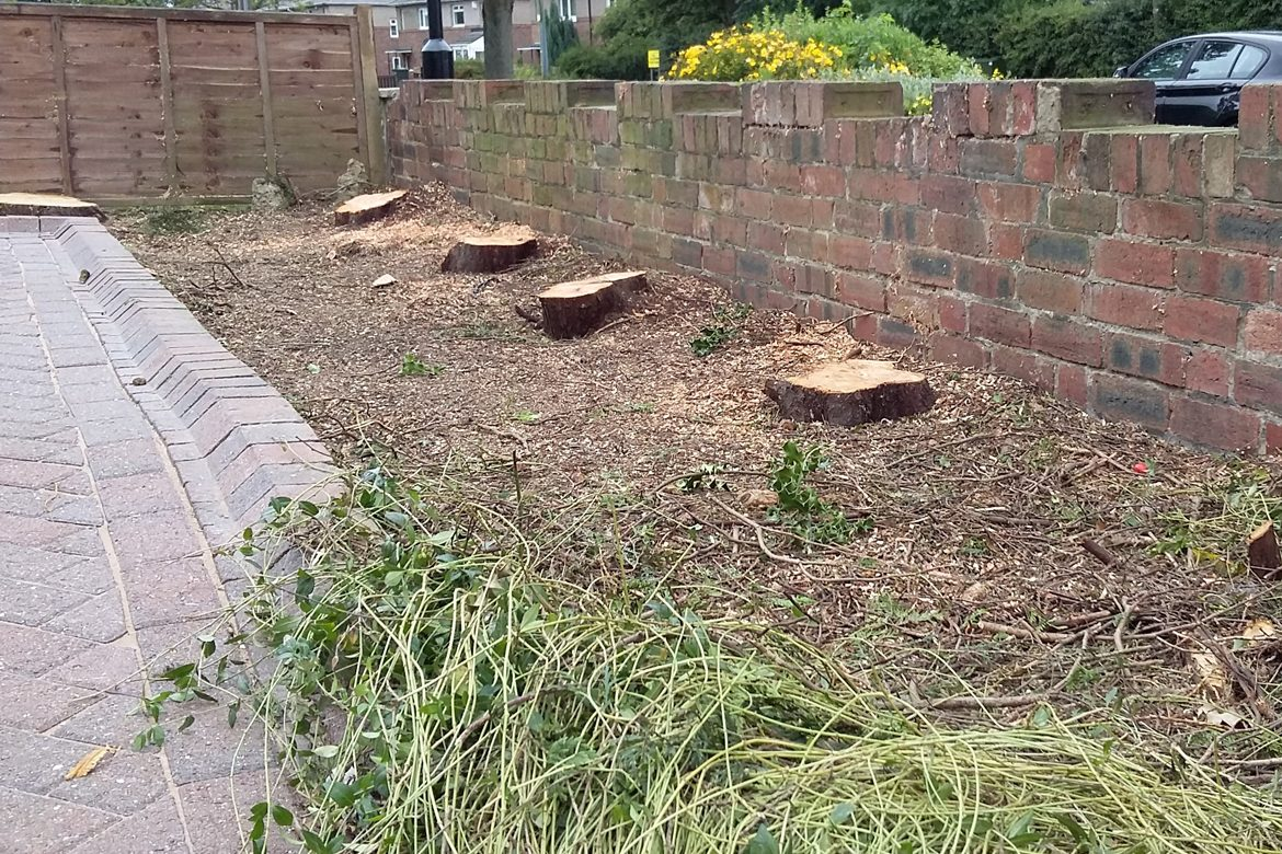 Dinnington - Stumps ready to be removed
