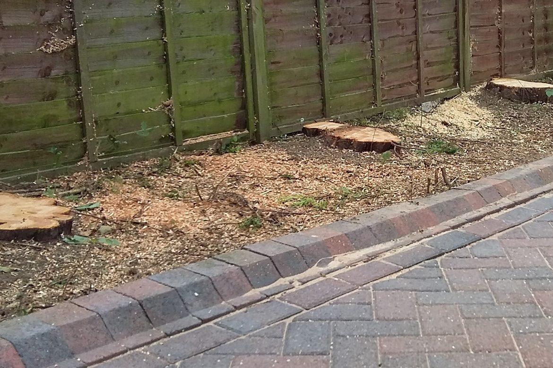 Dinnington - Trees have been felled