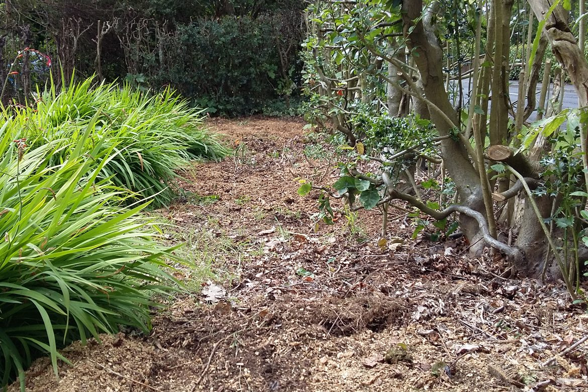 Eastern Way - Stumps removed