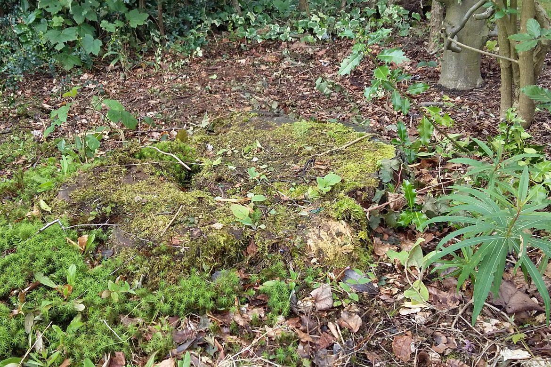 Eastern Way - Old Tree Stump