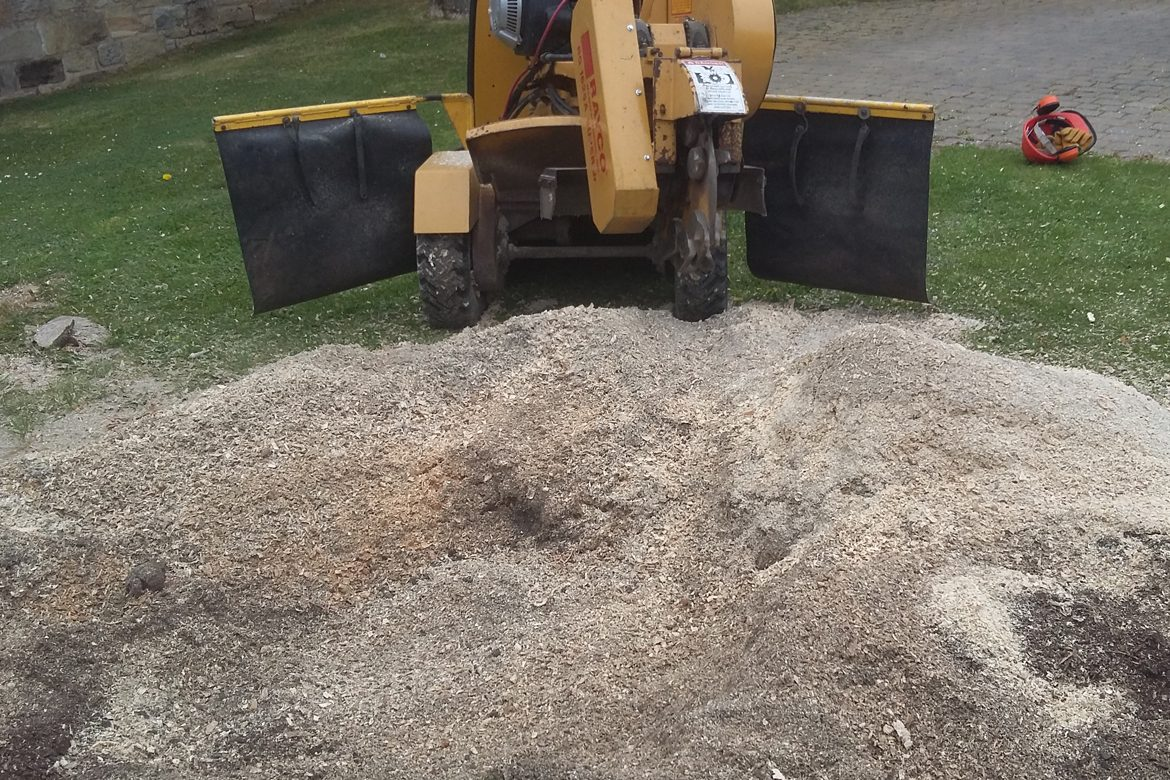 Shortridge - Tidying up following stump removal
